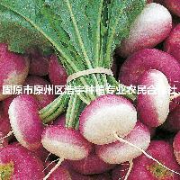 芜菁粉 纯植物原粉 120目 厂家现货包邮 标准比 量大从优