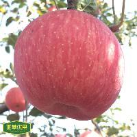 原产地正宗洛川红富士苹果果园直供装箱全国配送