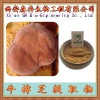 牛樟芝提取物 10:1  牛樟菇提取物
