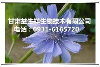 洋姜提取物  种植基地    量大从优   欢迎采购