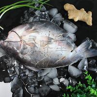冰冻清江鱼,烤鱼半成品鱼,腌制鱼,浔味堂,清江鱼