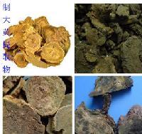 制大黄提取物   种植基地    量大从优   欢迎采购
