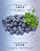 蓝莓粉 蓝莓浓缩粉 蓝莓提取物 现货供应
