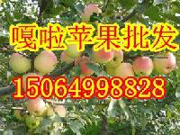 山东早熟苹果价格及红富士苹果产地市场日综述