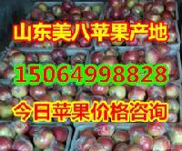 山东美八苹果产地在哪里,美八苹果价格多少