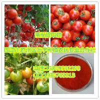 番茄提取物 西红柿提取物 番茄速溶粉 番茄浸膏粉