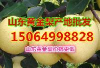 山東省黃金梨產地批發價格,今日黃金梨產地價格