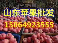山东苹果产地红将军苹果批发价格