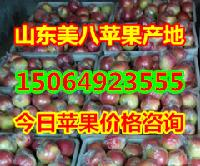 山东省美八苹果产地价格,美八苹果批发价格