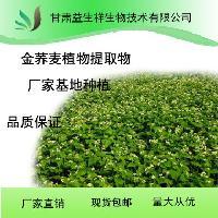 甘肃益生祥 金荞麦植物提取物 厂家直销
