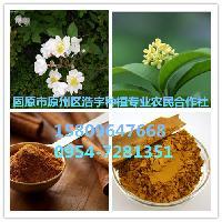 月桂皮粉功效与作用 香桂皮纯粉厂家现货低价促销 香月桂粉价格