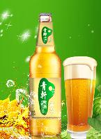 简装便宜啤酒厂家低价招商杭州宁波湖州嘉兴地区代理