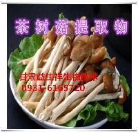 茶树菇提取物   茶树菇粉   25kg/桶