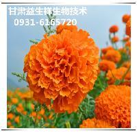 万寿菊提取物    叶黄素   品质保证   包邮