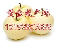 哪里的黄金梨价格便宜质量好?