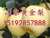 黄金梨产地价格