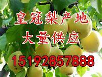 今年的山东省皇冠梨产地批发价格