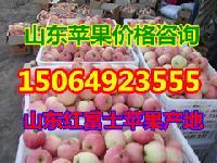烟台红富士苹果批发价格行情,现在山东苹果价格