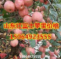 红富士苹果产地的山东苹果价格