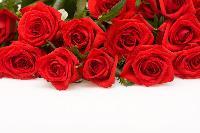纯天然植物精油 玫瑰精油 玫瑰油 现货
