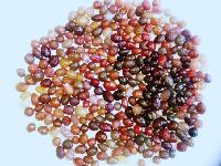 葡萄籽精油 葡萄籽油 亚麻油酸 原花色素