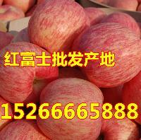 山东红富士苹果今日价格下降果园直销