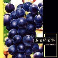 益生祥厂家现货包邮 葡萄籽提取物 原花青素95% UV检测