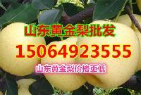 黄金梨价格多少钱一斤,今日黄金梨批发价格