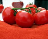 冷破/热破番茄粉