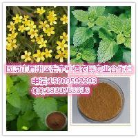 蜂花提取物  蜂花浸膏粉 香蜂草,蜜蜂草,香水薄荷