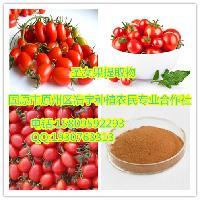 圣女果提取物 小番茄提取物 樱桃番茄提取物
