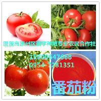 供应番茄粉 番茄提取物  纯天然 现货包邮