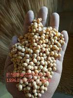 进口大豆供货商 批发 一手货源