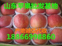 现在烟台苹果产地什么价格行情