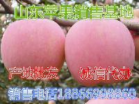 烟台红富士苹果什么价格行情?
