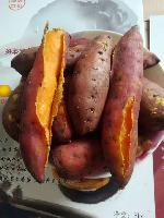 诚招代理一件代发大量供应广东鸡蛋黄番薯,自家农场种植。