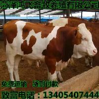 梅州市小牛犊价格 小黄牛多少钱一头