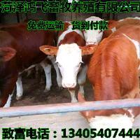 1000斤肉牛出栏价格