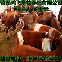 柳州肉牛 7一8个月的牛犊多少钱