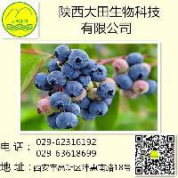 供应优质蓝莓提取物 蓝莓果粉