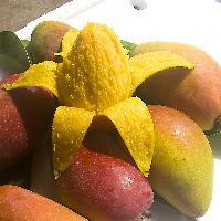 海南三亚贵妃芒果树上熟 新鲜水果红金龙小贵妃芒果8斤装包邮