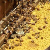 蜂蜜冻干粉