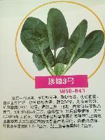 日本菠菜种子