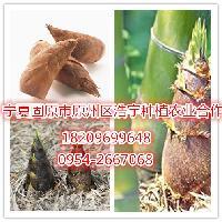竹笋粉厂家批发竹笋膳食纤维60% 膳食纤维调节肠道