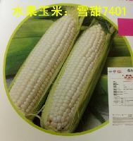 進口水果玉米種子香甜7401