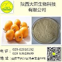 供应果蔬粉枇杷粉 10:1 厂家直销