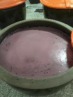 蓝莓  黑枸杞  各类原料代发酵