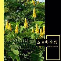 番泻叶提取物 规格10:1 源头厂家 番泻叶粉