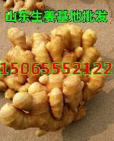 山东老姜0.6元起,生姜产地批发量大从优