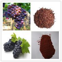 真正葡萄籽提取物 原花青素  98%  斯诺特生物